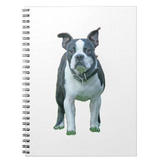 Boston terrier  1b spiral notebook