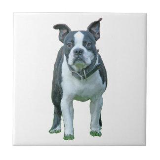 Boston terrier  1b tile
