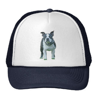 Boston terrier  1b trucker hat