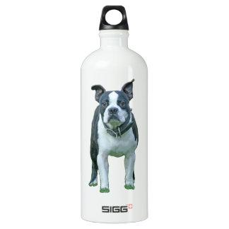 Boston terrier  1b water bottle