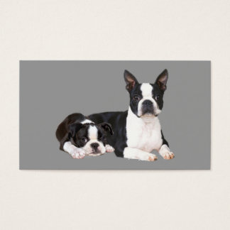 Boston Terrier Breeder Business Card