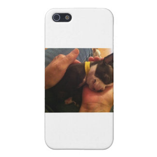 Boston terrier case for iPhone 5/5S