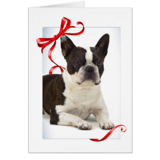 Boston Terrier Christmas Cards, Photocards, Invitations & More