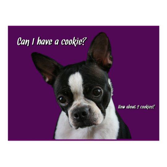 Boston Terrier:  Cookie please? Postcard