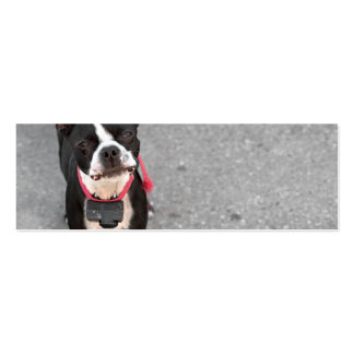 Boston Terrier Dog Business Cards