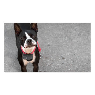 Boston Terrier Dog Business Card Templates