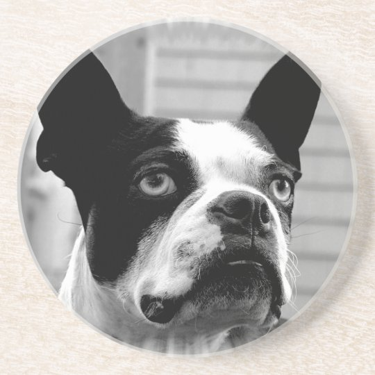 Boston Terrier Dog Coasters