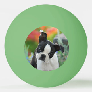 Boston Terrier Dog Cute Puppy Animal Head Photo Ping Pong Ball