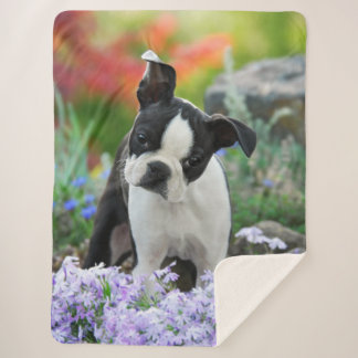 Boston Terrier Dog Cute Puppy Animal Head Photo -, Sherpa Blanket