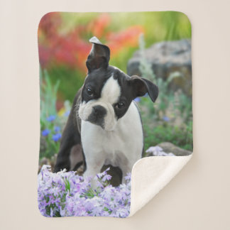 Boston Terrier Dog Cute Puppy Animal Head Photo Sherpa Blanket