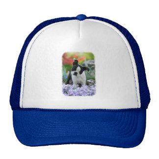 Boston Terrier Dog Cute Puppy Portrait Photo - cap Trucker Hat