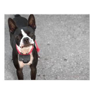 Boston Terrier Dog Personalized Invite