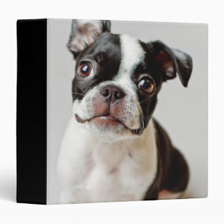 Boston Terrier dog puppy. 3 Ring Binders