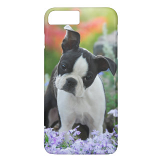 Boston Terrier Dog Puppy iPhone 7 Plus Case
