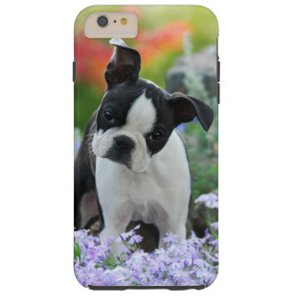 Boston Terrier Dog Puppy Portrait Cell Phonecase Tough iPhone 6 Plus Case