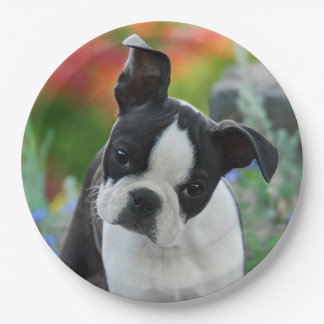 Boston Terrier Dog Puppy Portrait, happy party Paper Plate