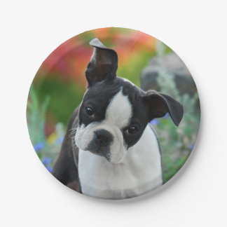 Boston Terrier Dog Puppy Portrait, party Paper Plate