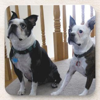 Boston Terrier dogs Coasters