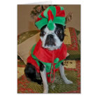 Boston Terrier Elf Christmas Card