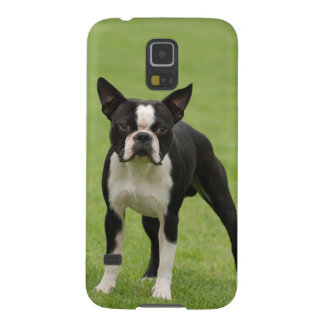 Boston terrier galaxy s5 covers
