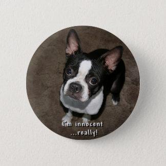 Boston Terrier:  I'm Innocent 2 Inch Round Button