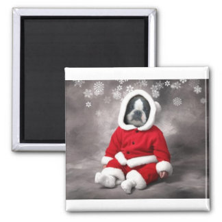BOSTON TERRIER IN XMAS OUTFIT MAGNET
