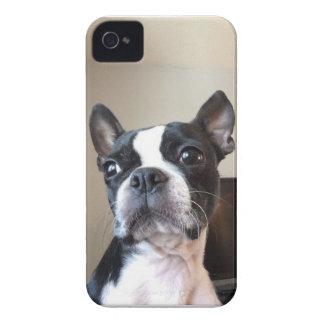 Boston Terrier iPhone 4 Case