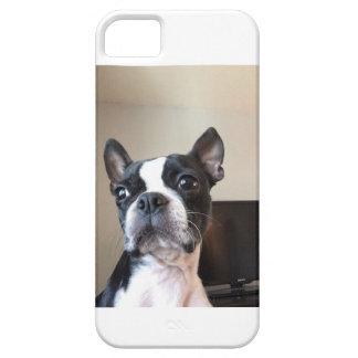 Boston Terrier iPhone Case 5c or 5s