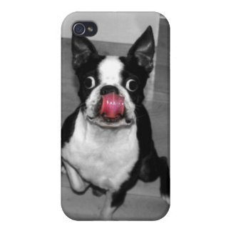 Boston Terrier Iphone Case iPhone 4/4S Case