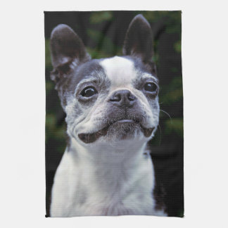 Boston Terrier Kitchen Towel