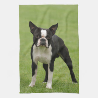 Boston terrier kitchen towels
