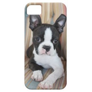 Boston Terrier Love iPhone 5 Case