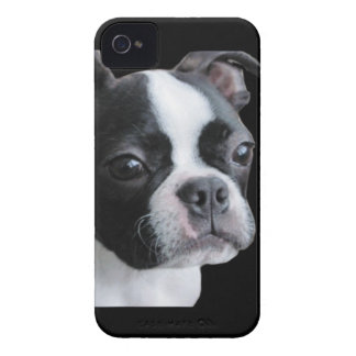 Boston Terrier:  More than my share of cuteness iPhone 4 Case