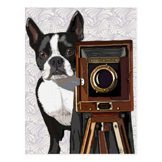 Boston Terrier Photographer 2 Postcard