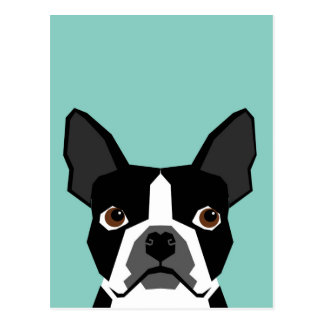 Boston Terrier Postcard