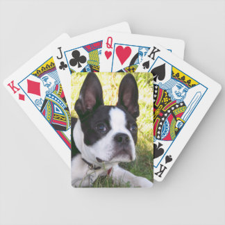 Boston Terrier Pup Deck of Cards