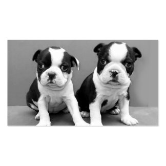 Boston Terrier puppies business cards