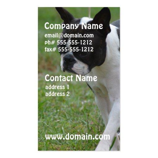 Boston Terrier Puppy Business Card