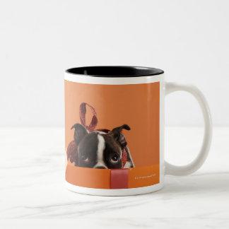 Boston terrier puppy in gift box Two-Tone coffee mug