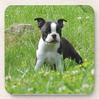 Boston Terrier Puppy in Meadow Coaster Set