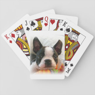 Boston Terrier Puppy Playing Cards