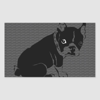 Boston Terrier puppy Woof