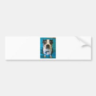 Boston Terrier sitting on a bed Bumper Sticker