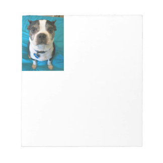 Boston Terrier sitting on a bed Notepad