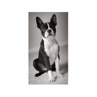 Boston Terrier Sitting Sculpture Standing Photo Sculpture