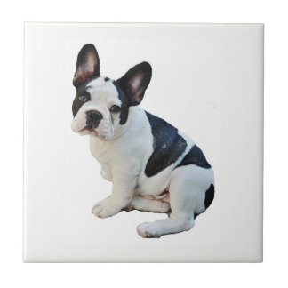 Boston Terrier Tile