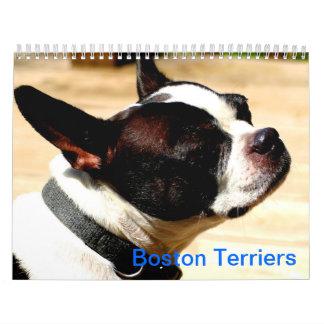 Boston Terriers Calender Wall Calendar