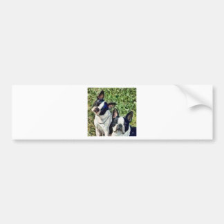 Boston Terriers - Skipper & Dee Dee Bumper Sticker