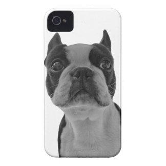 Boston Terrior Case-Mate iPhone 4 Cases