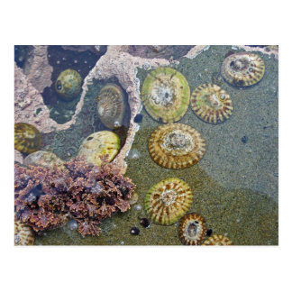 botanical beach shells postcard
